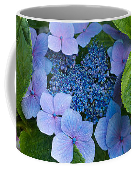 Photography Coffee Mug featuring the photograph Close-up Of Hydrangea Flowers by Panoramic Images