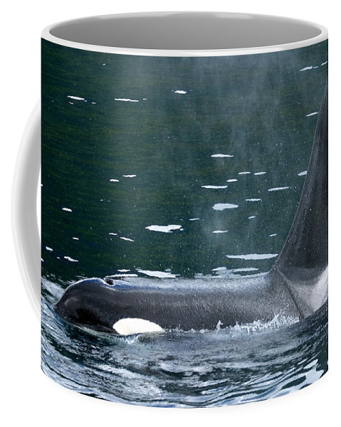 Close-up Coffee Mug featuring the photograph Close-up Of Killer Whale In Johnstone by Ralph Lee Hopkins