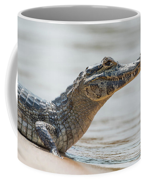 Brazil Coffee Mug featuring the photograph Close-up Of Yacare Caiman On Sandy Beach by Ndp