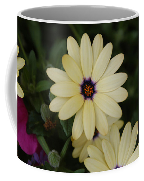 Red Lodge Coffee Mug featuring the photograph Close View Of A Flower by Stacy Gold