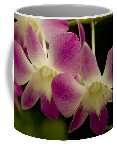 Orchids Coffee Mug featuring the photograph Close View Of A Pink Orchid Flowers by Todd Gipstein