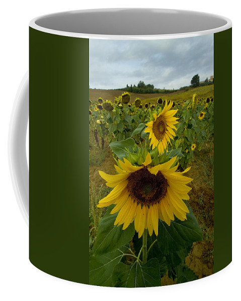 Sunflowers Coffee Mug featuring the photograph Close View Of A Sunflower At The Edge by Todd Gipstein