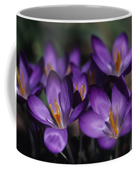 Washington Coffee Mug featuring the photograph Close View Of Purple African Violets by Stacy Gold