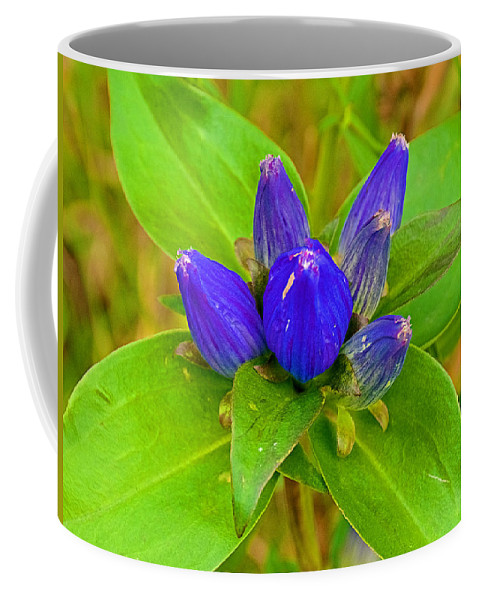 Closed Gentian Closeup In Campground In Saginaw Coffee Mug featuring the photograph Closed Gentian Closeup In Campground In Saginaw-minnesota by Ruth Hager