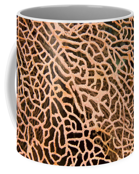 Sea Fans Coffee Mug featuring the photograph Closeup Detail Of The Interlaced by Tim Laman
