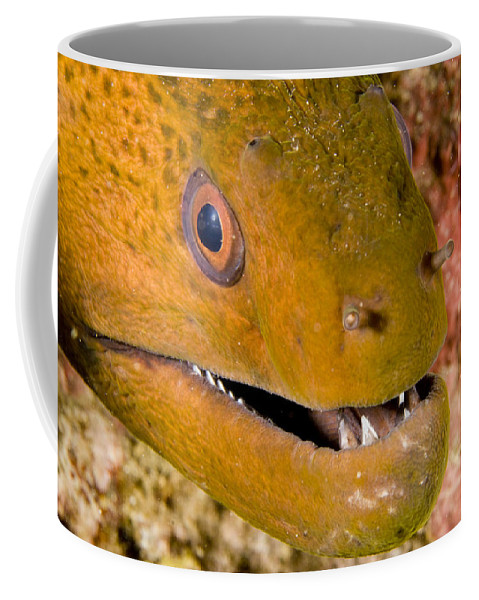 Closeups Coffee Mug featuring the photograph Closeup Of A Giant Moray Eel by Tim Laman
