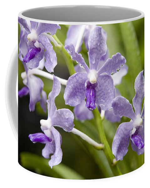 Hybrid Cultivated Orchids Coffee Mug featuring the photograph Closeup Of A Hybrid Cultivated Orchid by Tim Laman