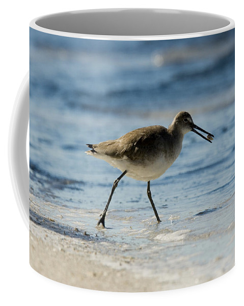 Beaches Coffee Mug featuring the photograph Closeup Of A Willet Catoptrophorus by Tim Laman