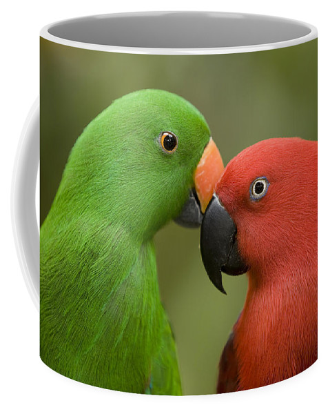 Two Animals Coffee Mug featuring the photograph Closeup Of Male And Female Eclectus by Tim Laman