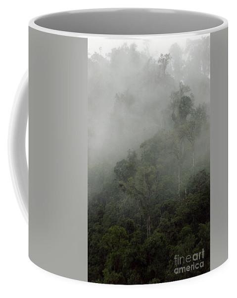 Rainforest Coffee Mug featuring the photograph Cloud Forest by Kathy McClure
