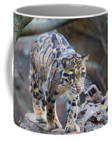 Animal Coffee Mug featuring the photograph Clouded Leopard by SR Green