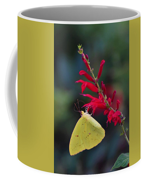 Butterfly Coffee Mug featuring the photograph Cloudless Sulphur And Pineapple Sage by Chip Gilbert