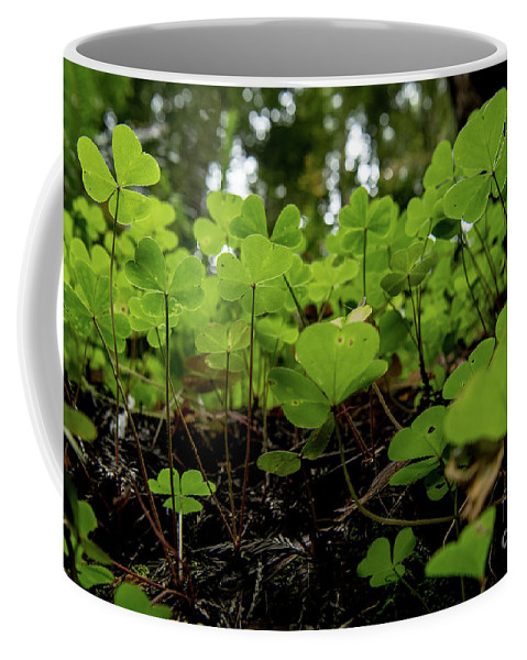 Montgomery Woods State Natural Reserve Coffee Mug featuring the photograph Clover In Montgomery Woods State Natural Reserve by David Oppenheimer