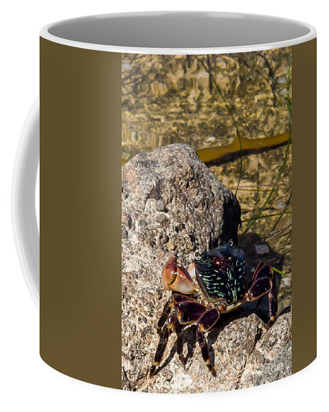 Crab Coffee Mug featuring the photograph Coastal Crab by Shawn Jeffries