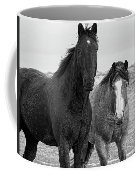 Black Coffee Mug featuring the photograph Coated Curiosity by Amanda Smith