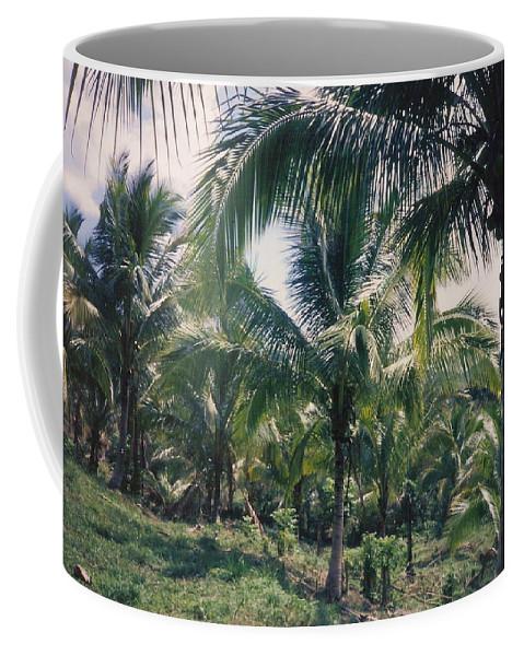 Jamaica Coffee Mug featuring the photograph Coconut Farm by Debbie Levene