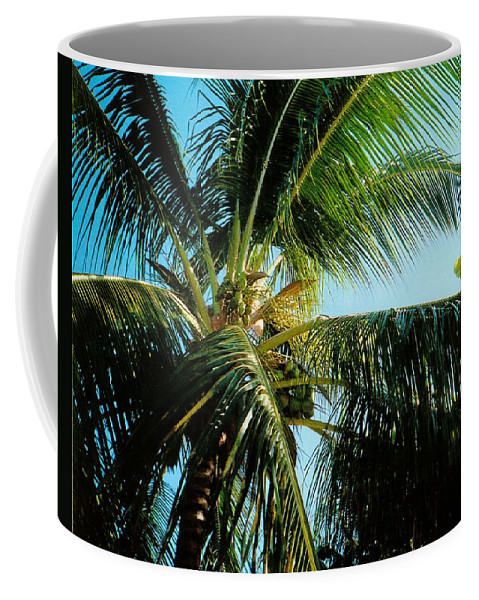 Jamaica Coffee Mug featuring the photograph Coconut Tree by Debbie Levene