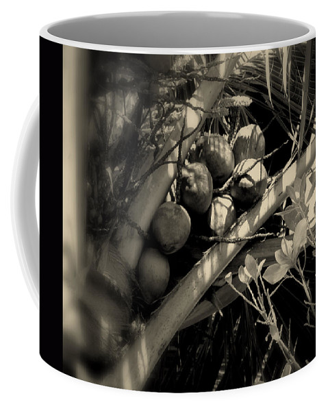 Coconuts Coffee Mug featuring the photograph Coconuts by Susanne Van Hulst