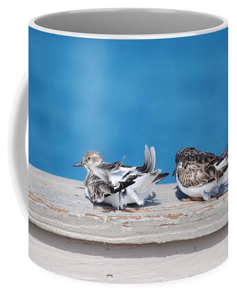 Bird Coffee Mug featuring the photograph Cold Birds by Rob Hans