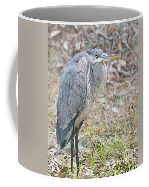 Bird Coffee Mug featuring the photograph Cold Blue Heron by Phill Doherty