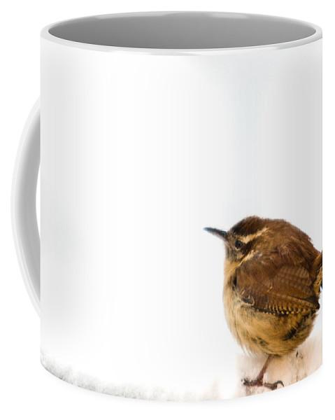 Cumberand Coffee Mug featuring the photograph Cold Carolina Wren by Douglas Barnett