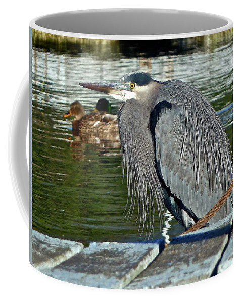 Birds Coffee Mug featuring the photograph Cold Morning by Diana Hatcher