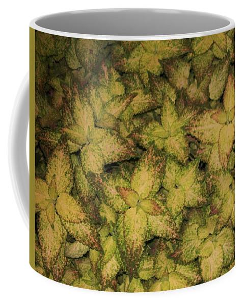 Coleus Coffee Mug featuring the painting Coleus Plants Pennsylvania Gardens by Eric Schiabor