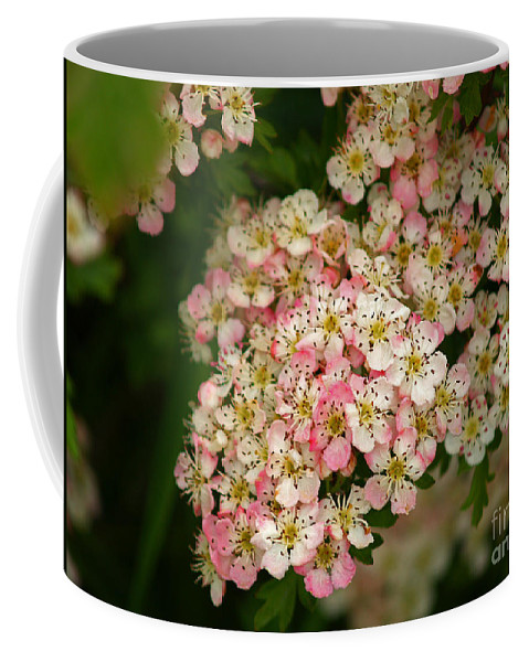 Fine Art Photography Coffee Mug featuring the photograph Colleen by Patricia Griffin Brett