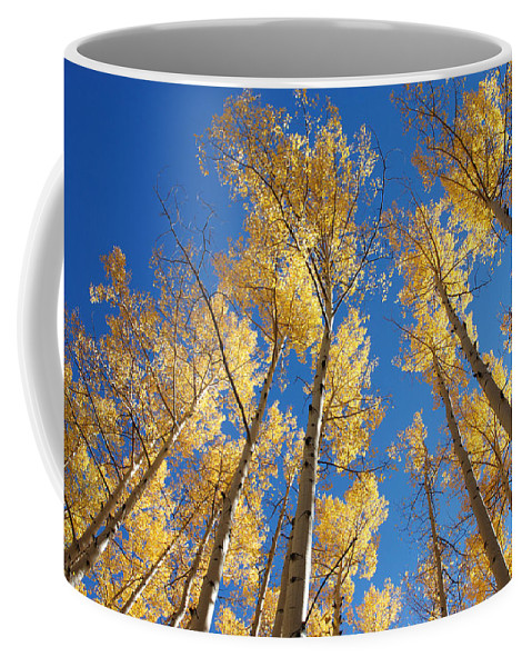Aspen Coffee Mug featuring the photograph Colorado Aspen by Jerry McElroy
