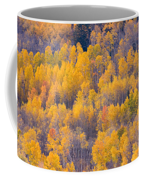 Trees Coffee Mug featuring the photograph Colorado Autumn Trees by James BO Insogna