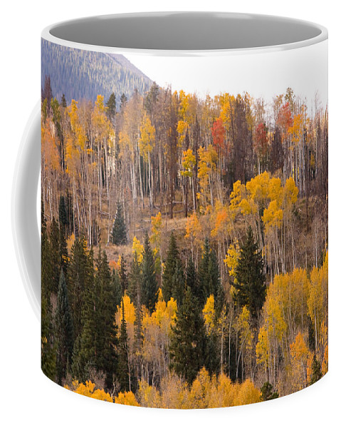 Trees Coffee Mug featuring the photograph Colorado Fall Foliage by James BO Insogna