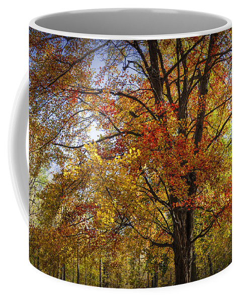 Art Coffee Mug featuring the photograph Colorful Autumn Tree In Southwest Michigan By Gun Lake by Randall Nyhof