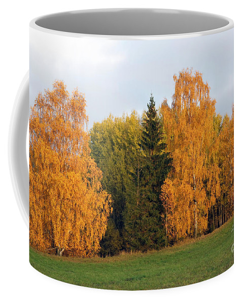Tree Coffee Mug featuring the photograph Colorful Autumn - Trees In Autumn by Michal Boubin