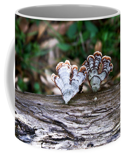 Colorful Coffee Mug featuring the photograph Colorful Bracket Fungi by Douglas Barnett