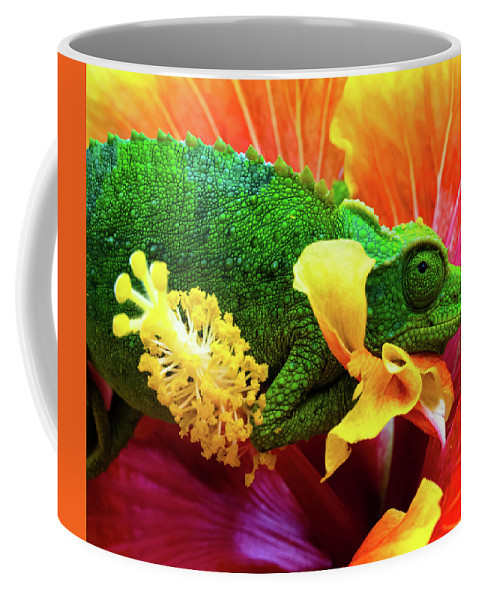 Chris Johnson Coffee Mug featuring the photograph Colorful Chameleon by Christopher Johnson