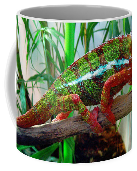 Chameleon Coffee Mug featuring the photograph Colorful Chameleon by Nancy Mueller