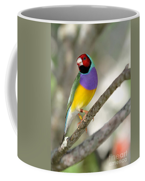 Landscape Coffee Mug featuring the photograph Colorful Gouldian Finch by Sabrina L Ryan