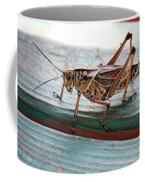 Insects Coffee Mug featuring the photograph Colorful Grasshopper by Carol Groenen