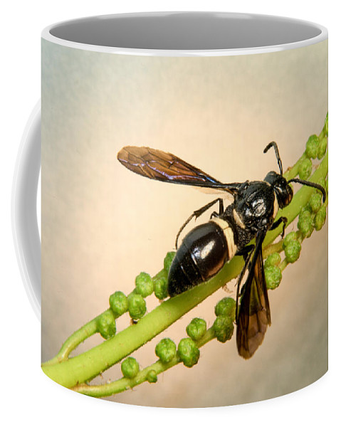 Hymenoptera Coffee Mug featuring the photograph Colorful Hymenop 1 by Douglas Barnett