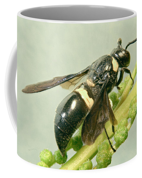 Hymenoptera Coffee Mug featuring the photograph Colorful Hymenop 3 by Douglas Barnett