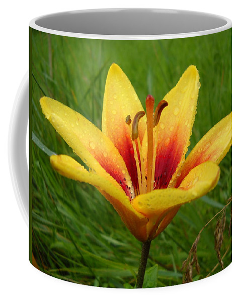 Floral Coffee Mug featuring the photograph Colorful Lily Dew Drops by Kent Lorentzen
