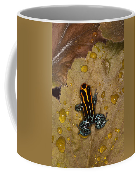 Poison Dart Frog Coffee Mug featuring the photograph Colors Of Nature by Janet Fikar