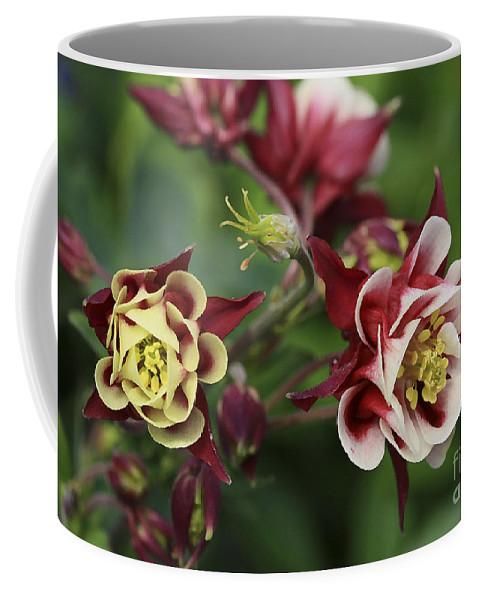 Flowers Coffee Mug featuring the photograph Columbine In Spring by Deborah Benoit