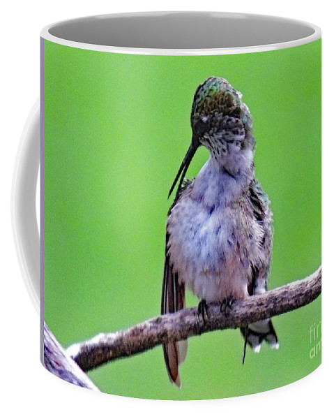 Ruby-throated Hummingbird Coffee Mug featuring the photograph Combing His Feathers - Ruby-throated Hummingbird by Cindy Treger