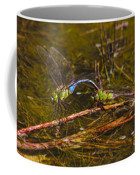 Reid Callaway Dragonflies Coffee Mug featuring the photograph Come Along With Me Dragonflies by Reid Callaway