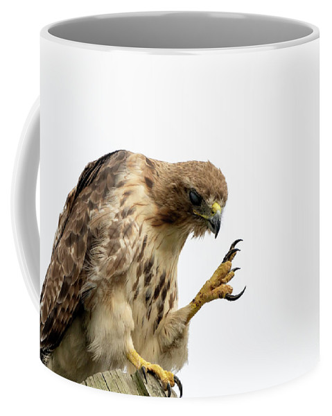 Red Tailed Hawk Coffee Mug featuring the photograph Come Closer Kid by Sam Rino