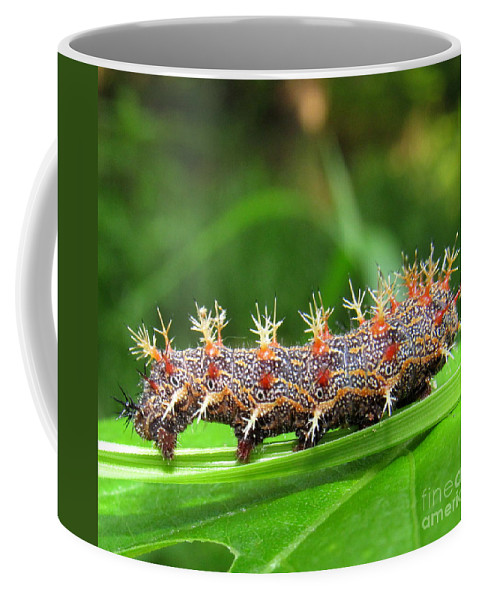 Comma Caterpillar Question Mark Caterpillar Colorful Caterpillars Spiny Caterpillars Of North America Colorful Critters Entomology North American Insect Diversity Appalachian Biodiversity Of Life On Earth Beautiful Bugs Natural Life Cycles Natural Design Rare Woodland Creatures Of The Forest Stinging Insects Metamorphosis Question Mark Butterfly Caterpillar Comma Butterfly Caterpillar Orange And Black Spiny Caterpillar Natural Defense Mechanisms Coffee Mug featuring the photograph Comma Caterpillar by Joshua Bales