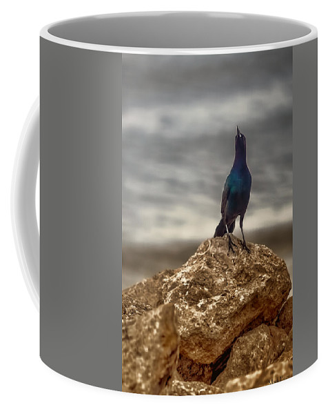 Florida Coffee Mug featuring the photograph Common Grackle by Mark Fuge