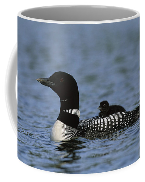 North America Coffee Mug featuring the photograph Common Loon Gavia Immer, With Baby by Roy Toft