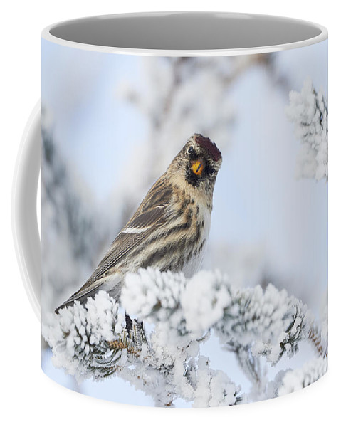 Common Redpoll Coffee Mug featuring the photograph Common Redpoll - Hello by Jestephotography Ltd